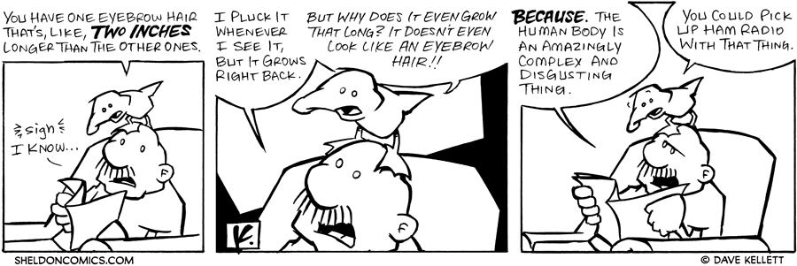 strip for February / 12 / 2007