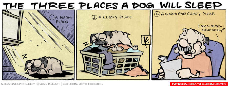 strip for July / 19 / 2008 - What are the three places a dog will sleep?