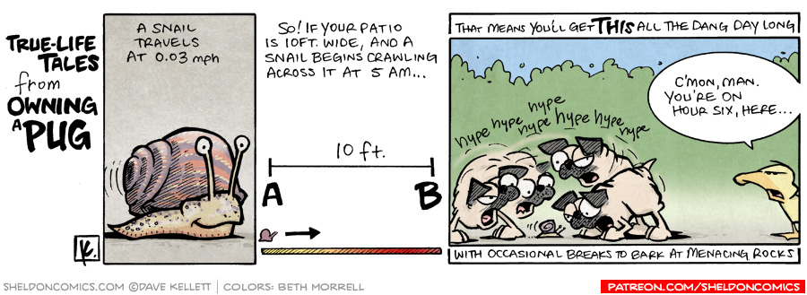strip for November / 20 / 2008 - A snail and...