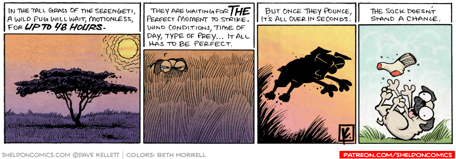 strip for March / 18 / 2009 - What will a wild pug wait motionless for?