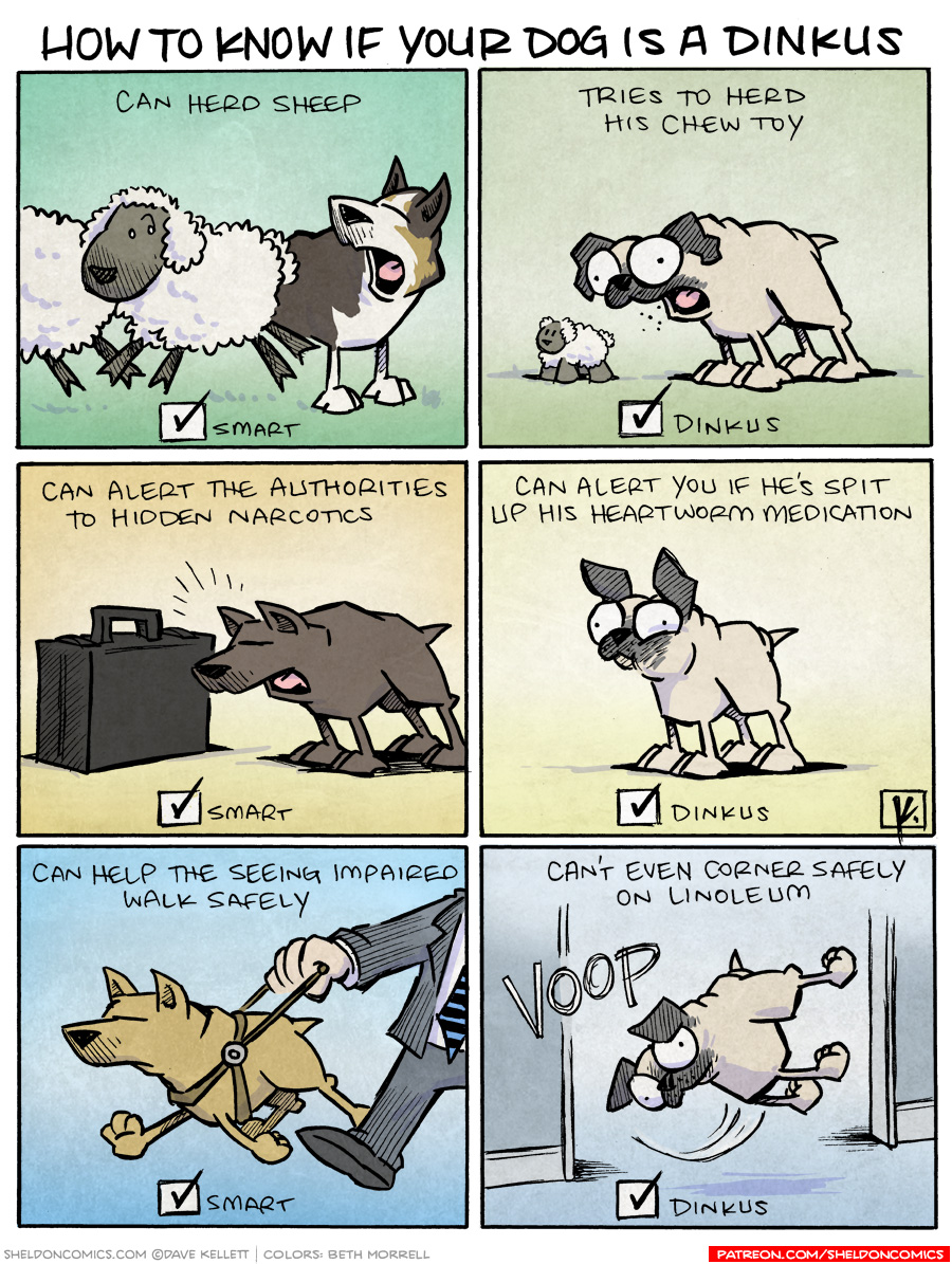 strip for September / 14 / 2010 - How to know if your dog's a dinkus?