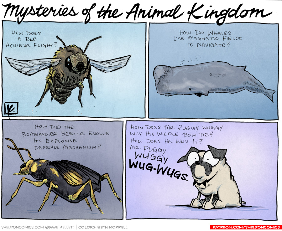 strip for April / 24 / 2012 - What are some mysteries of the animal kingdom?
