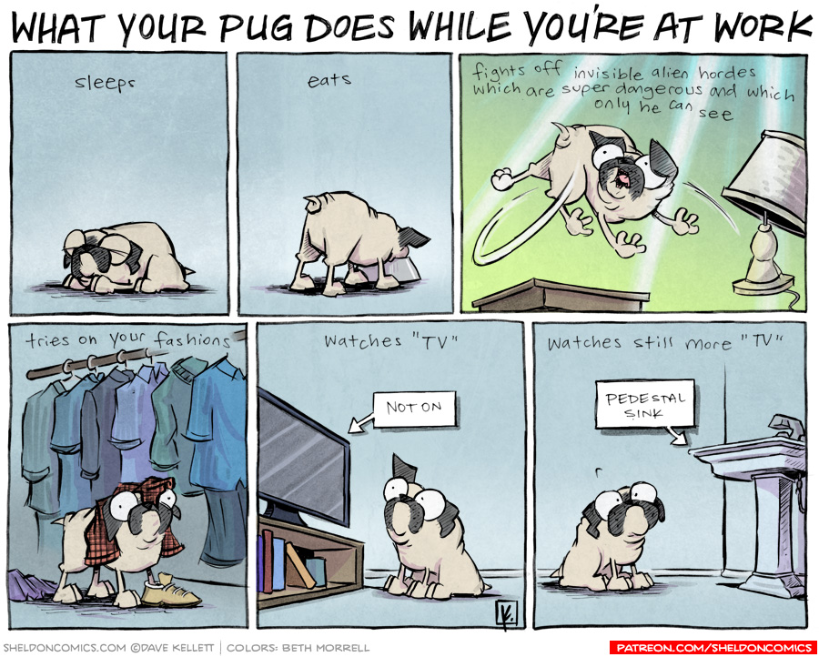 strip for May / 1 / 2012 - What does your pug do while you're at work?
