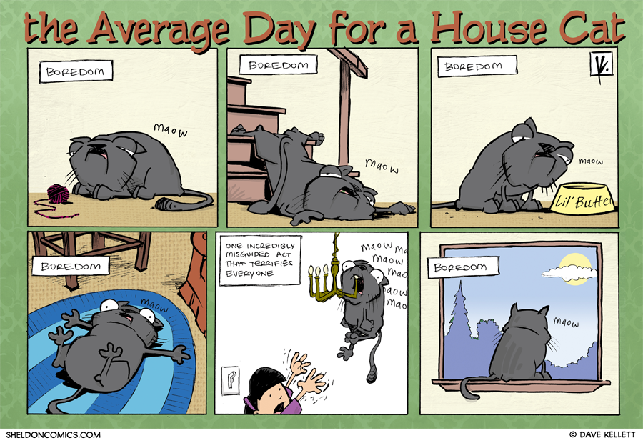 strip for November / 29 / 2012 - What's an average day for a house cat?