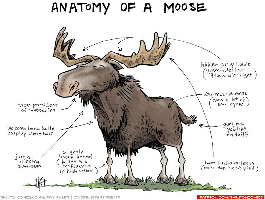 strip for May / 11 / 2015 - Anatomy of a Moose