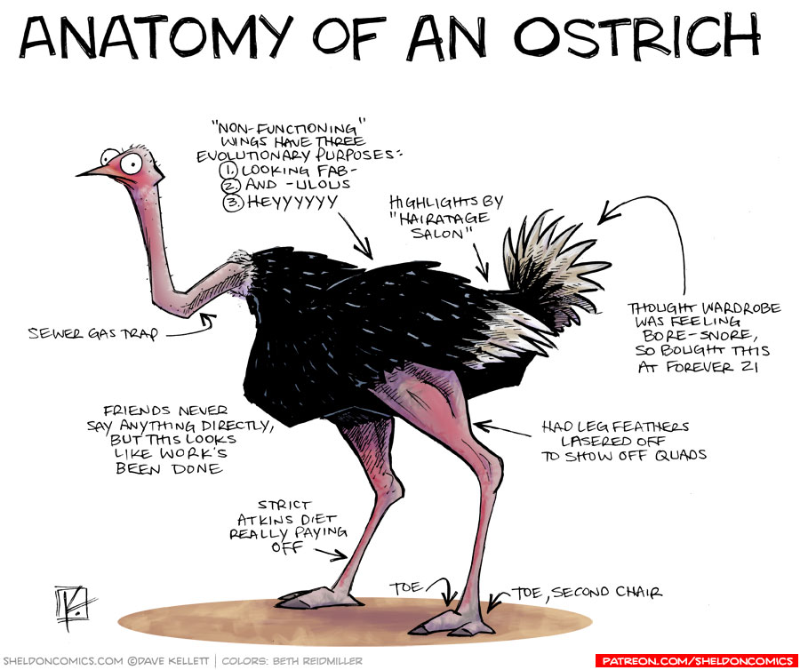 strip for May / 22 / 2015 - Anatomy of an Ostrich
