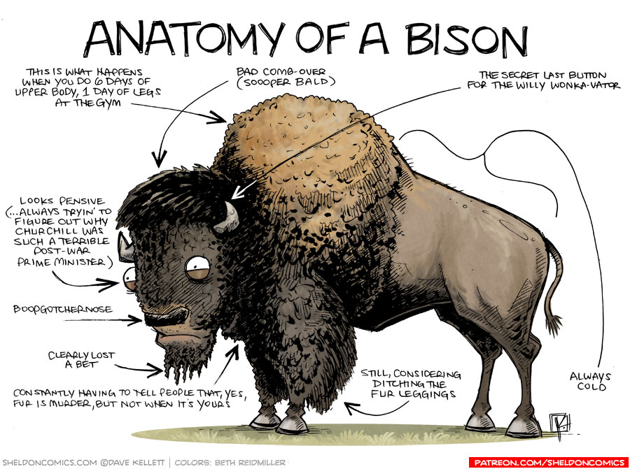 strip for May / 25 / 2015 - Anatomy of a Bison