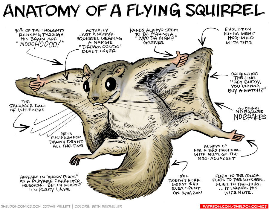 strip for June / 25 / 2015 - Anatomy of a Flying Squirrel