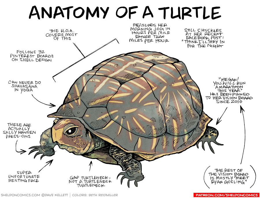 strip for November / 17 / 2015 - Anatomy of a Turtle
