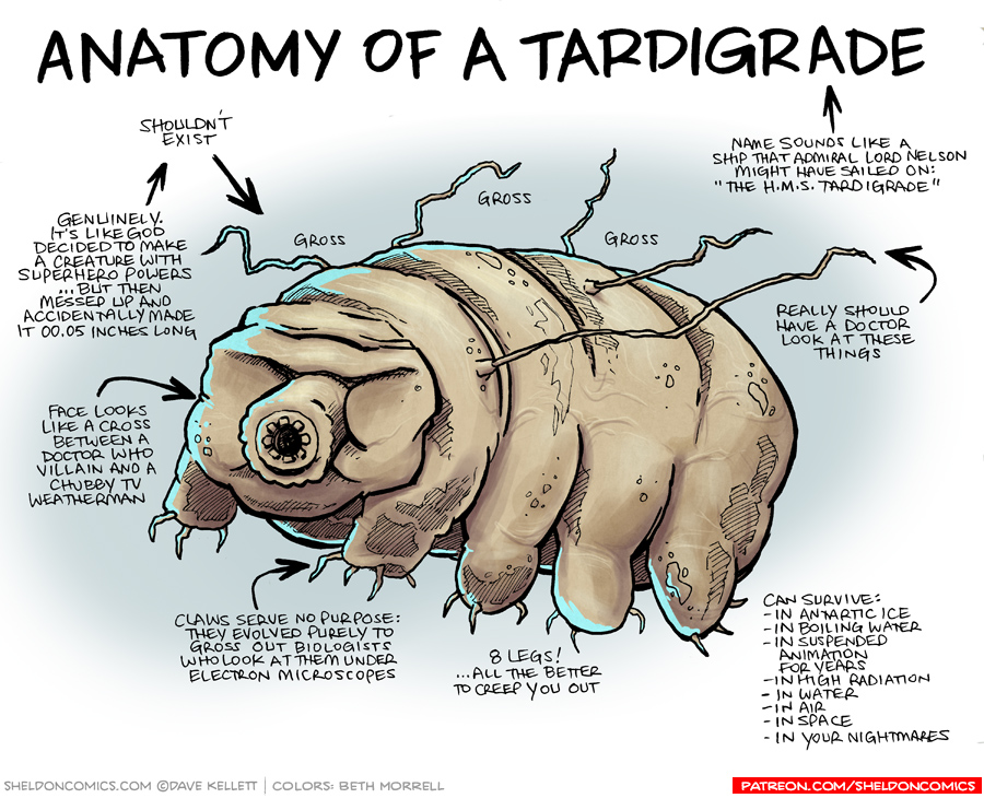 strip for October / 19 / 2016 - Anatomy of a Tardigrade