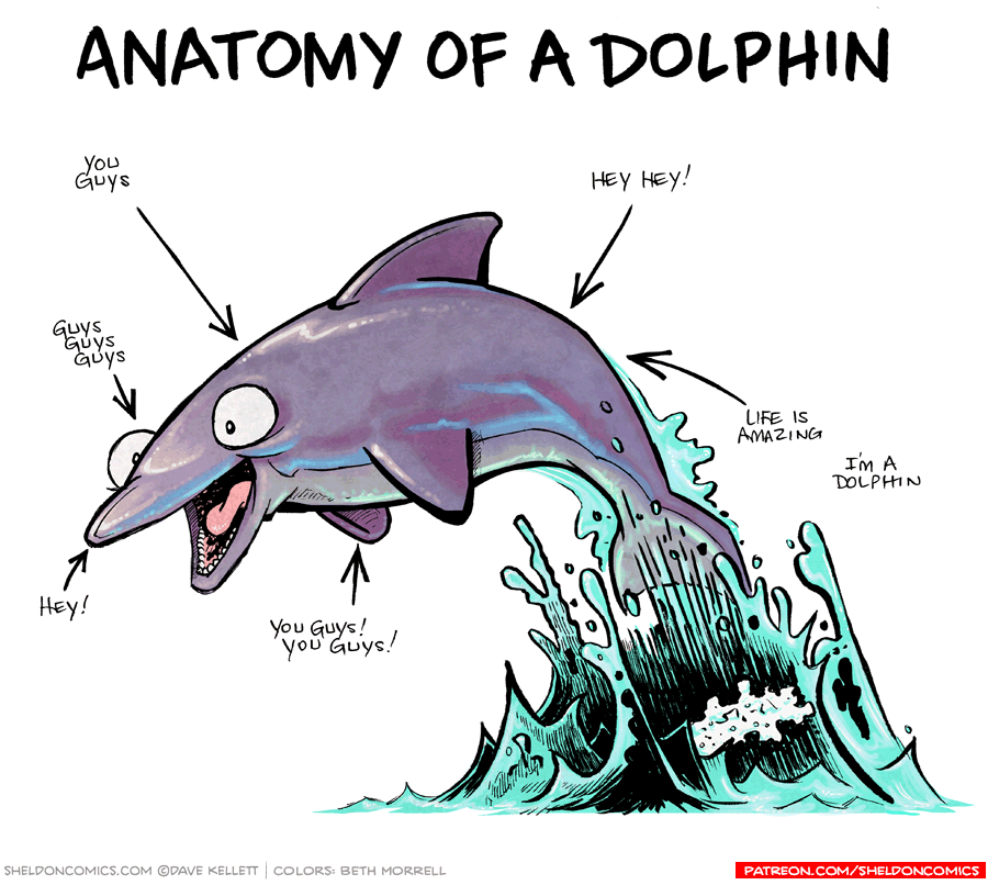 strip for October / 31 / 2016 - Anatomy of a Dolphin