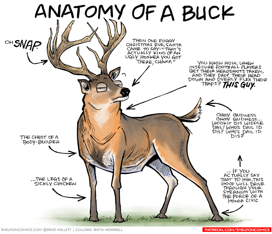 strip for December / 16 / 2016 - Anatomy of a Buck