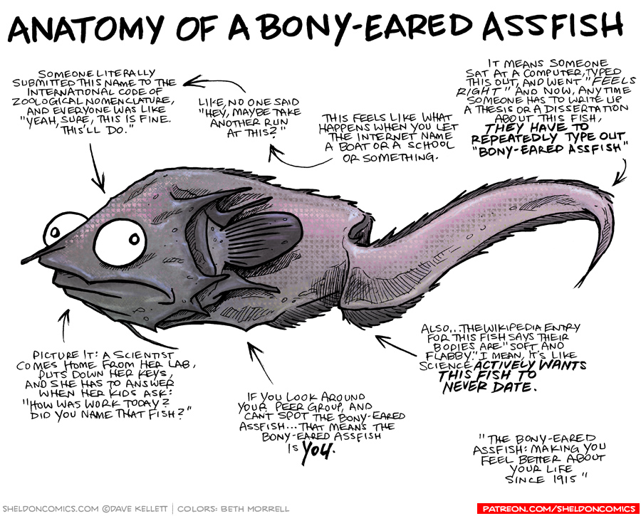 strip for May / 10 / 2017 - Anatomy of the Bony-Eared Assfish