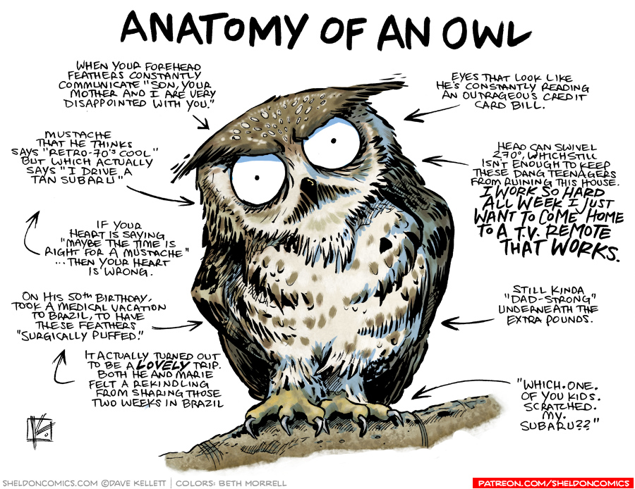 strip for May / 12 / 2017 - Anatomy of an Owl