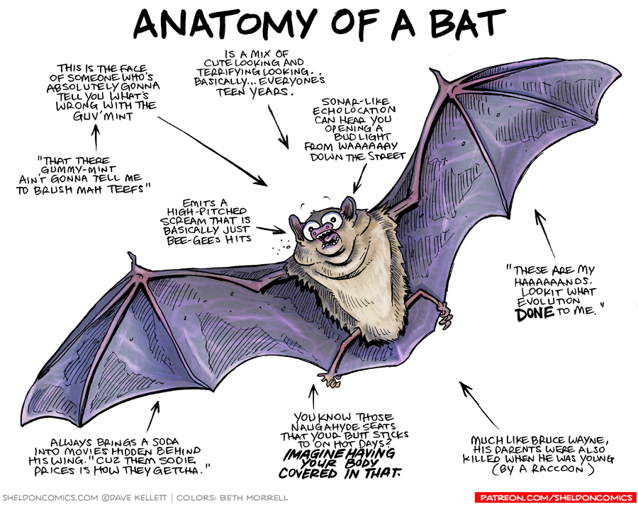strip for June / 1 / 2017 - Anatomy of a Bat