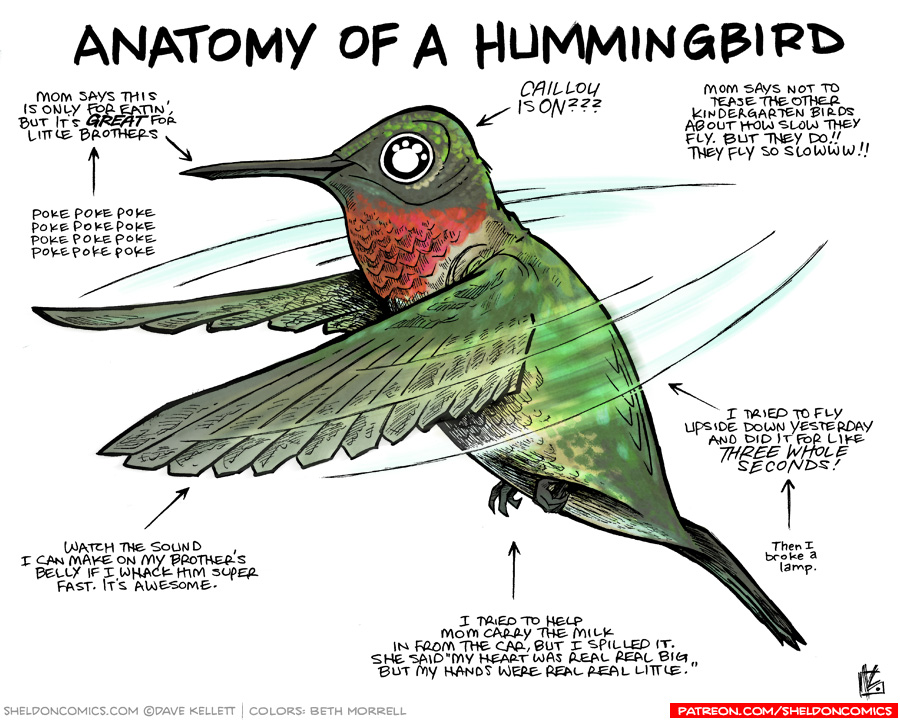 strip for July / 3 / 2017 - Anatomy of a Hummingbird